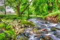 Picture nature, trees, spring, stream