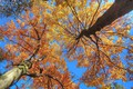 Picture the sky, trunk, trees, branches, autumn, leaves