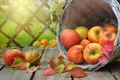 Picture apples, basket, physalis, fruit, Board, leaves, branches, fruit