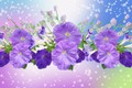 Picture flowers, Petunie, Purple