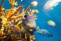Picture sea, fish, the bottom of the sea, marine gliny