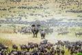 Picture animals, Africa, elephants, the herd, the elephant, elephant, wildebeest