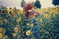 Picture red, smile, hair, redhead, mood, girl, curls, field, sunflowers