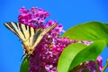 Picture Butterfly, Butterfly, Flowers, Flowering, Macro, Spring, Green leaves, Spring, Macro