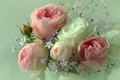 Picture grey background, bouquet, roses