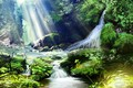 Picture forest, nature, waterfall, Solnechnye rays