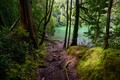 Picture Azores, Portugal, trees, the bushes, moss, path, lake, forest