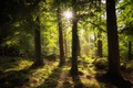 Picture the sun, trees, rays, forest