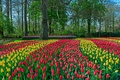 Picture parks, colorful, Netherlands, Netherlands, tulips, tulips, red, Keukenhof, flowers