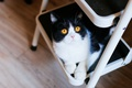 Picture cat, cutie, metal, yellow eyes, ladder, legs, looking up, black and white, floor, ladder, lies, ...
