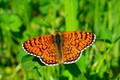 Picture Butterfly, Spring, Macro, Macro, Spring, Butterfly