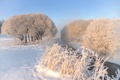 Picture nature, snow, winter, trees, frost