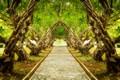 Picture landscape, nature, plumeria, alley, trail, tree, trees, exotic, forest, Park, park