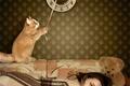 Picture cat, bear, sleeps, sleeping, girl, bear, Wallpaper, Teddy, clock, watch, cat