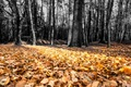 Picture nature, forest, leaves