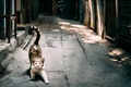 Picture cat, stretching, street, cat