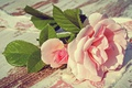 Picture buds, pink, petals, gentle, Board, rose, leaves, composition, roses, fabric, gently, light, flowers