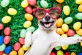 Picture grass, dog, colorful, glasses, Easter, hearts, happy, dog, spring, Easter, eggs, holiday, funny, the painted ...