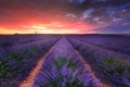 Picture field, the sky, clouds, nature, the evening, lavender