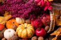 Picture flowers, nuts, pumpkin, still life, the gifts of autumn, garnet, leaves