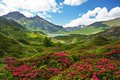 Picture flowers, mountains, France, rhododendrons, lake, greens, the sun, the sky, grass, Savoie, clouds