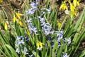 Picture meduzanol ©, Bush, ©, spring 2018, hyacinths, flowers
