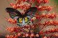 Picture plant, moth, insect, butterfly, flower