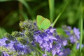 Picture Butterfly, Butterfly, Flowers, Macro, Spring, Spring, Macro, Flowers