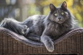 Picture cat, eyes, wool, look