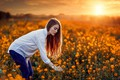 Picture Luiz Carlos Sene, mood, Alessandro Di Cicco, field, girl, rape, sunset