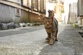 Picture cat, city, street, lonely, the city, yard, home, road, striped, sad, grey, look, cat