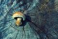 Picture wood, tree, mushroom