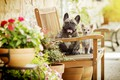 Picture flowers, bokeh, two dogs, dogs, bench, Chihuahua, French bulldog
