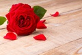 Picture romantic, roses, red rose, roses, petals, flowers