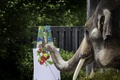 Picture elephant, trunk, brush, paint, easel