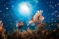 Picture sea, fish, the ocean, under water, fish lion
