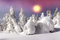 Picture winter, forest, the sky, the sun, snow, trees, snowflakes, the snow