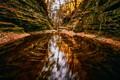 Picture Wisconsin, Baraboo, Dark Canyon, canyon, autumn, moss