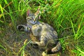 Picture meadow, kitty, cat, kitty, summer, grass, cat