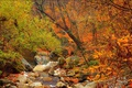 Picture forest, stream, stones, Autumn, Fall, Autumn, Colors, Forest, Trees