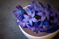 Picture macro, flowers, background, dark, petals, Cup, still life, blue, composition, bowl, hyacinths
