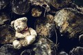 Picture bear, logs, toy