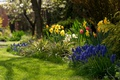 Picture spring, flowerbed, flowers