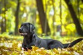 Picture dog, animal, autumn, nature, dog, leaves