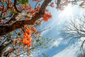 Picture spring, the sky, the sun, sry, blossom, tree, leaves, tree, sunshine, spring, flowers, flowers