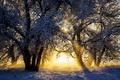 Picture winter, the sun, snow, trees, sunrise, dawn, morning