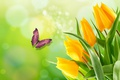 Picture BUTTERFLY, the Wallpapers, SPRING, BEAUTY, YELLOW TULIPS