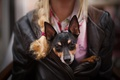 Picture girl, dog, Rattie ♥, ears, dog