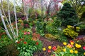 Picture Walsall Garden, tulips, England, the bushes, trees, garden, bridges, flowers