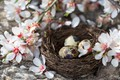 Picture Easter, Branches, Holiday, Flowers, Eggs, Spring, Socket